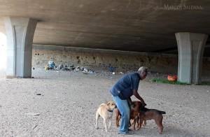 Milt+dogs